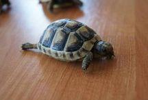 żółwiki;)