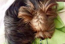 Dog hairstyles♡