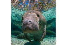 Florida. / by Randee McClelland