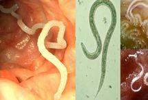 eliminando parasitas