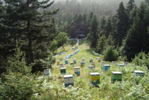 Karanikas Apiary / Places we place our beehives!!!! Lovely.....landscapes...!!!!