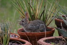Rabbit Resistant Plants / Protect your garden from browsing animals like rabbits and deer. These plants are all highly rabbit resistant.