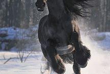 horses / by jenna