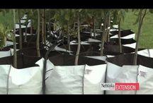 огород умный мешок Grow Bag
