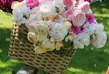 Flowers and gardens / by Gloria Pietruszka