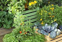 Vegie Garden / by Donna Benware