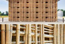 Bamboo that I like