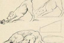 draw-ref-animals