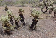 Arizona Plants / Plants that can be seen in Arizona