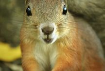 Squirrels! / Squirrels