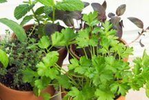 Indoor Winter Planting / Gardening indoors during the winter months