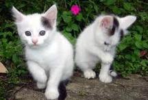 luv cat(。◕ω◕。)