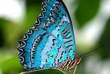 Faith: my beautiful blue butterfly / My daily reminder of my Faith