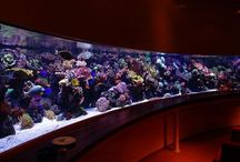 Reef Tanks / All about reef aquariums, saltwater and marine habitats.
