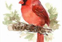 aquarell madarak