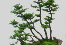 Kokedama & composition florale