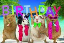 happy b-day animals