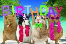 happy b-day animals
