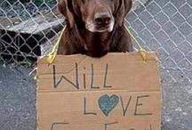 Puppy LOVES <3 / by Tabitha Dean