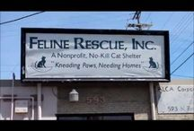 Feline Rescue in the media / News mentions and media appearances