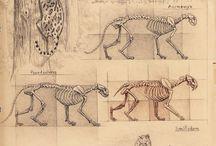 Рисунок животных