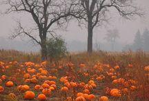 Halloween / by Michelle Sprunger