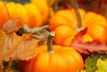 Photography: Autumn