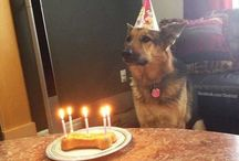 Dog Birthdays