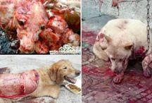 Stop animal cruelty!