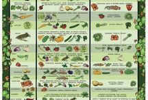 Camp Garden  / In 2014 we plan to have a camp garden to grow vegetables to use in the dining hall.