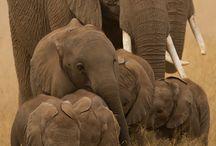 Animals beauty  / by Freda Du plessis