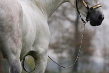 Horses / A little bit of everything.♥