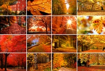 Autumn Destinations / Welcome to Skyscanner's autumn! 