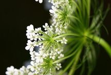 Interesting plants
