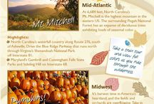 Autumn In New England / We love the fall season at The Residences at Westborough Station, check out these pins...