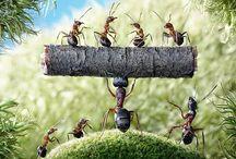 Ants / Ants