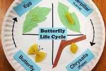 Caterpillars butterflies