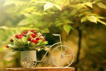 Такие разные цветы...)
