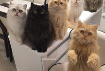 У каждой жизни должно быть 9 кошек