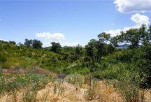 40610 MONTE VISTA, SAN JUAN CAPISTRANO home for sale / Home / Property for sale #california #home #luxuryhome #design #house #realestate #property #pool  #sanjuancapistrano