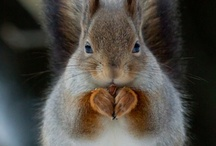 Squirrels... what else? / by Misty Sommers