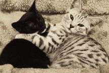 Our Blog Posts / Blogs about animal care