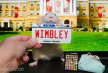 Milo, Wimbley and Fibbs / Wimbley the rat who lubs to read!