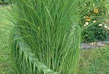 plants / landscaping