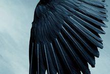 The dark side <3