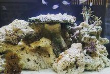 Reef Tanks / Marine Aquariums-Reef or Fish Only