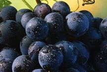 Raisins/vignes et vin