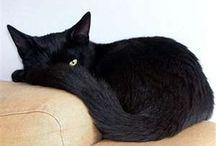 Feline / all kinds