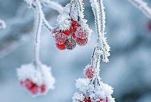 Leef de winter