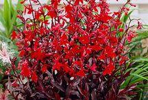 Flower bed / Perennials